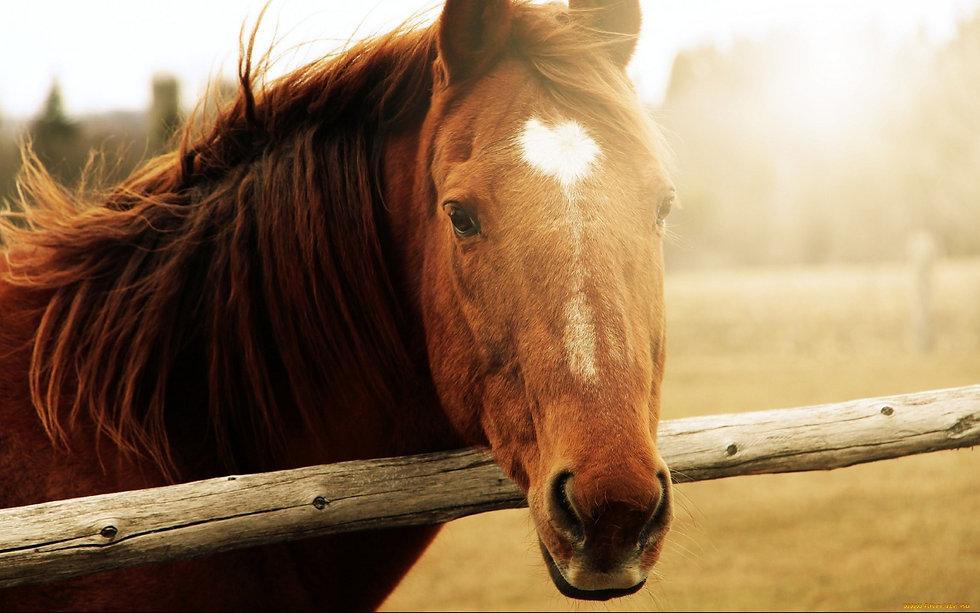 189-1893312_horse-wallpapers-horse-wallp