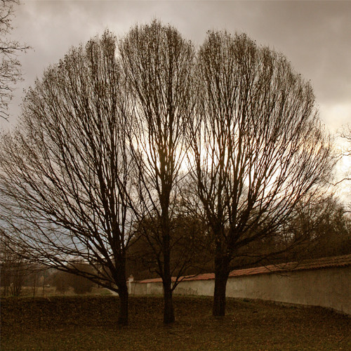 Trio of Trees, Cesky Krumlov