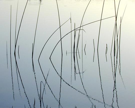Reeds Dancing, Santa Rosa
