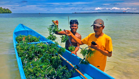 80 ton Rumput Laut Kering