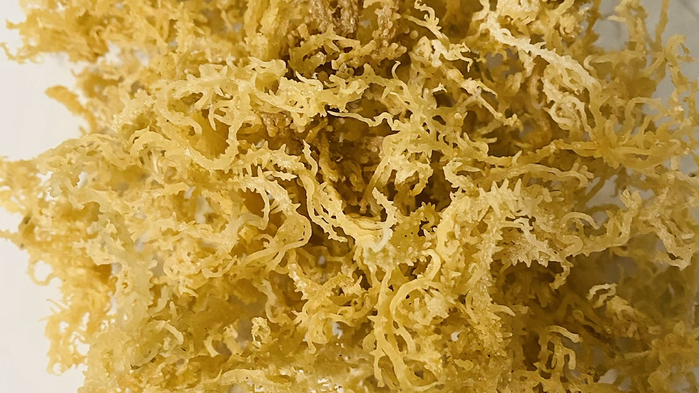 Raw Wildcrafted Golden Sea Moss