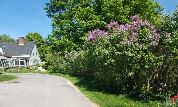 Inviting view of rustic Antrim inn with lilacs and foliage