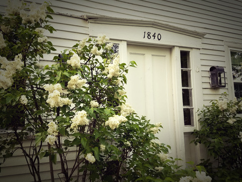 Lilacs in bloom in front of historic farmhouse