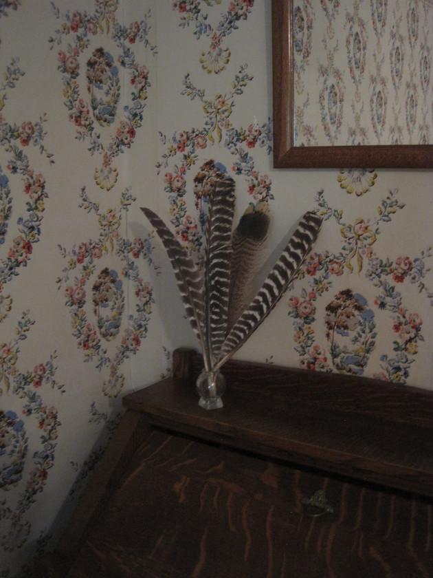Local wild turkey feathers