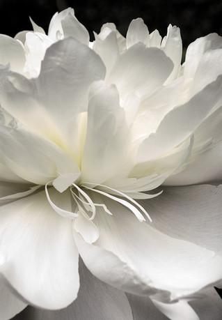Fleur-de-vie.jpg