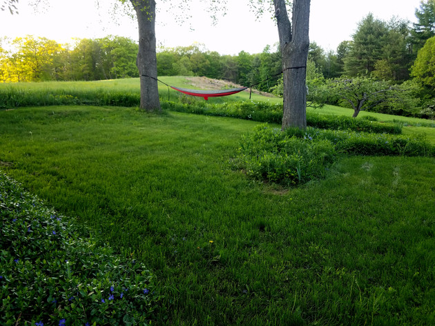 Relaxing hammock in expansive back yard