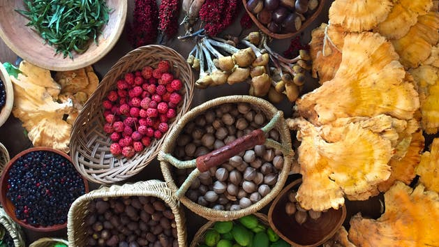 Foraging & Spices