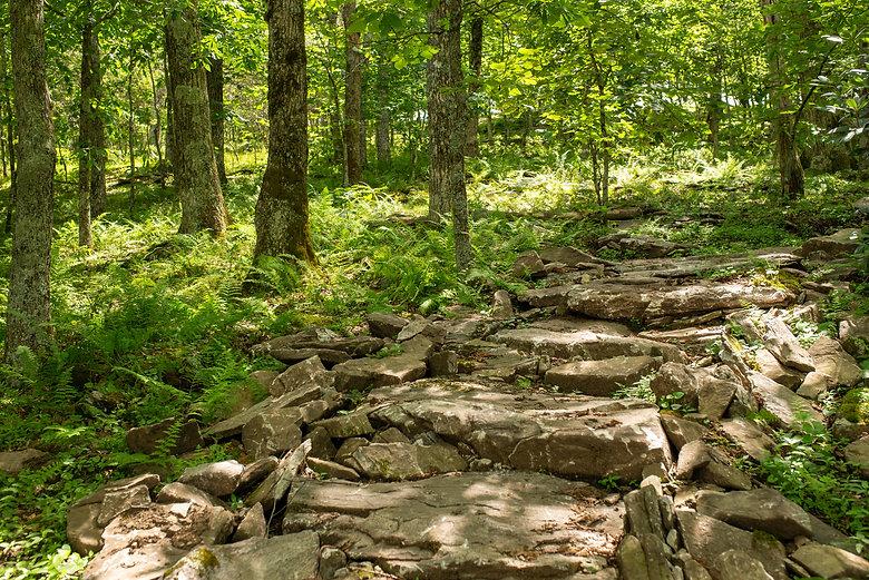 20200728 - 1509 - Gerton, NC - Bearwallow Mountain Connector Trail - 242.jpg