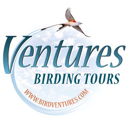 Learn to Bird at Your Home
