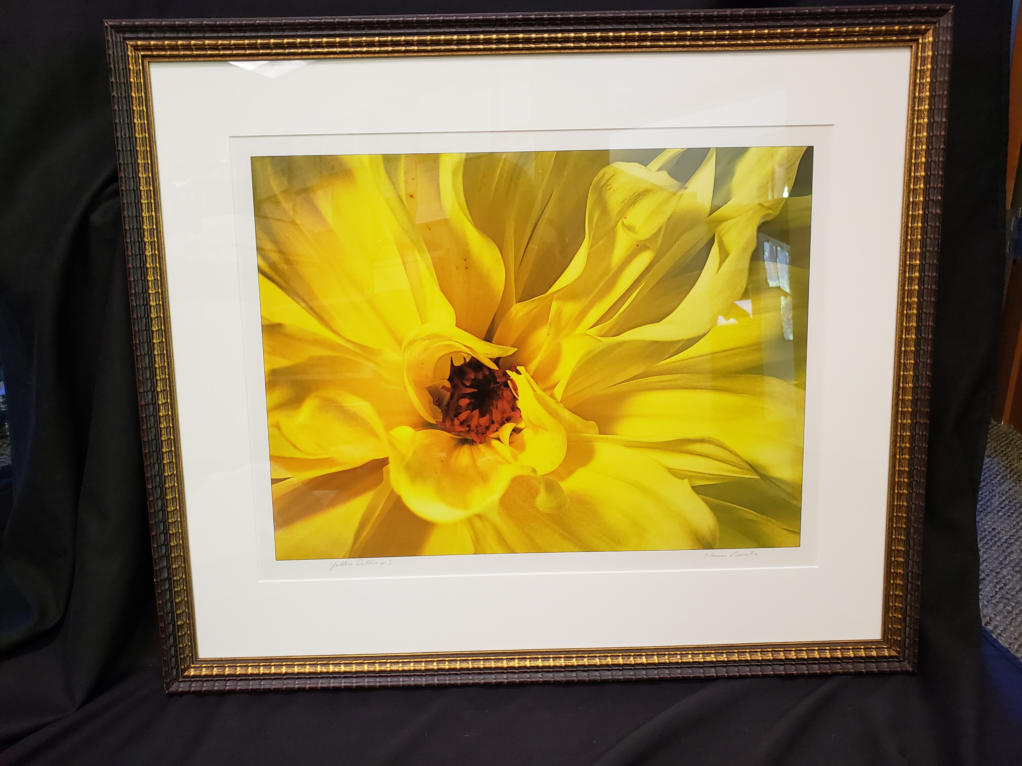 Yellow Dahlia by Werner Bonitz