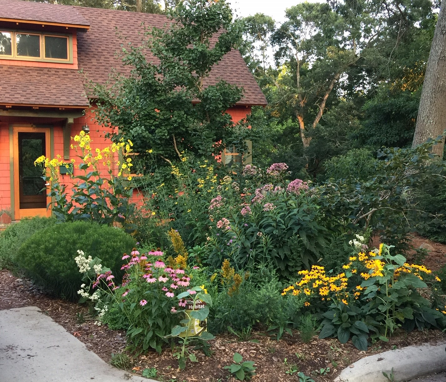 Native Plant Gardening Consultation