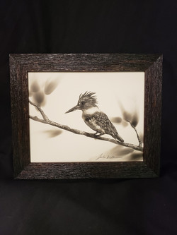 Kingfisher Watching by Julie Willan