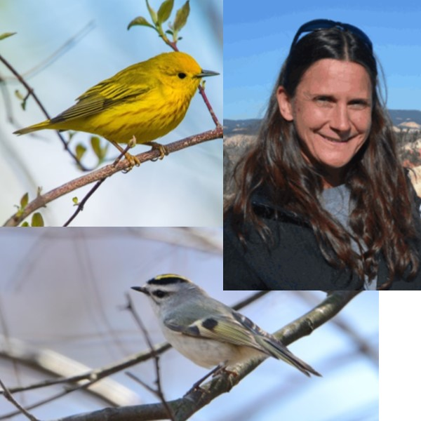 Guided Bird Outing with Pam Torlina