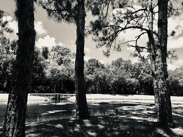 Swamplands image.JPG