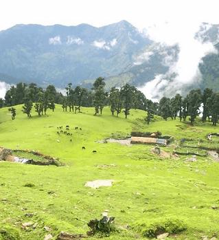 reasons-to-visit-chopta-valley-in-himala