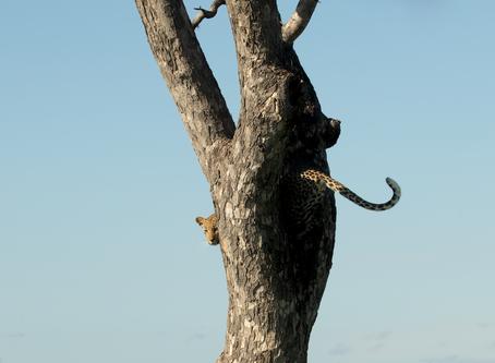 Capturing the Moment on Safari