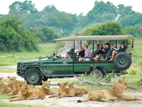 5 Reasons Why Now is the Best Time to Book an African Safari