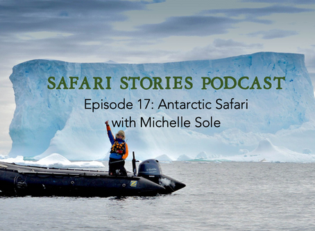 An Antarctic Safari with Michelle Sole