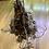 "Thumbnail: Philodendron Verrucosum ""Cobra"""