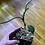 "Thumbnail: Philodendron Verrucosum ""Dark"""