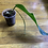 Thumbnail: Anthurium Pendulifoliun
