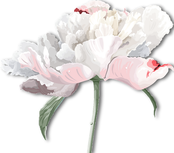 Peony-white-pink-shadow.png