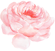 Watercolor Peony.png