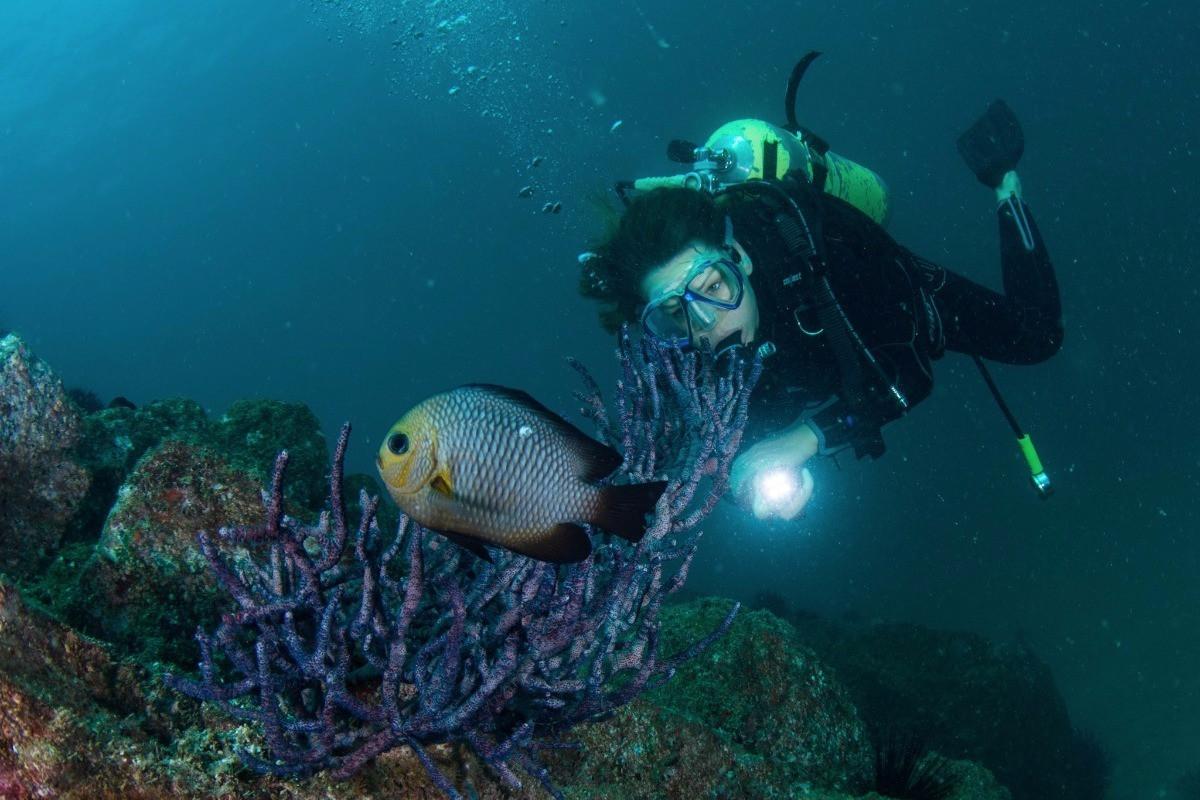 Fish-Identification.jpg