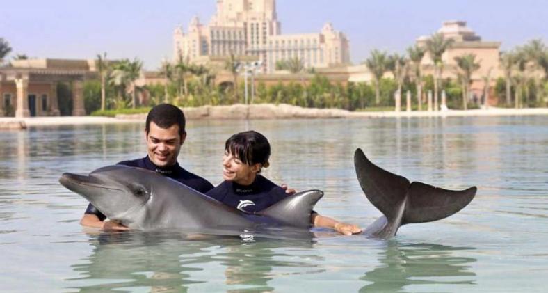 Dolphin Bay.png