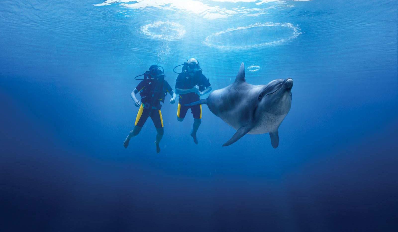 dolphinscubadive-hero-main.jpg