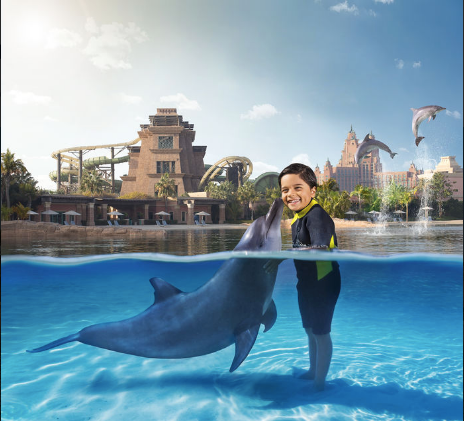 Dolphin Bay3.png