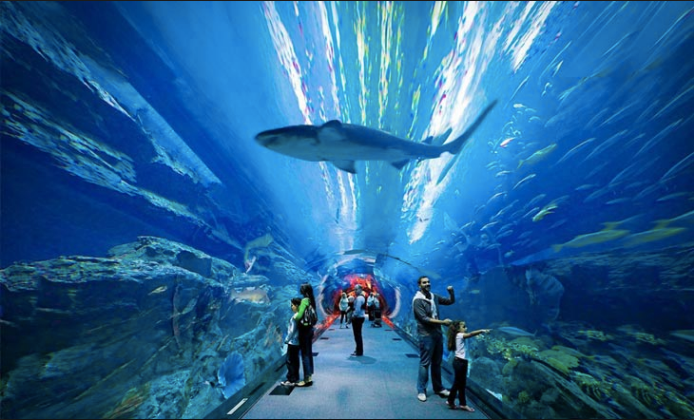 Lost Chambers Aquarium2.png
