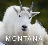 Butte Montana Convention & Visitors Bure