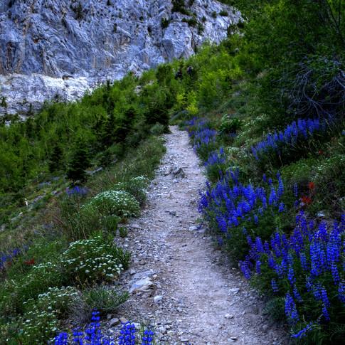 Southloop Trail