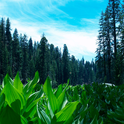 Crecent Meadow