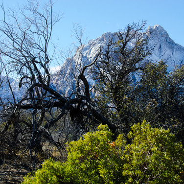 Pine Creek - Snow capped
