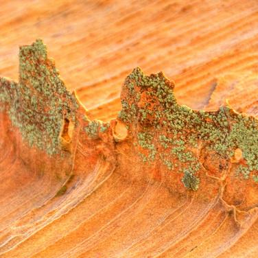 Lichen Shards