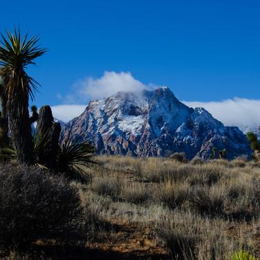 Yucca at Pine Creek