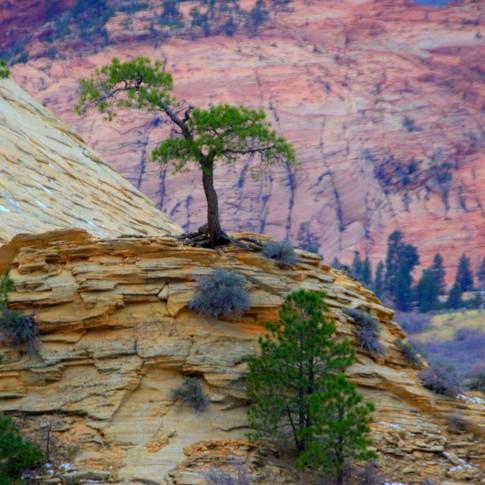 Giagni Tree