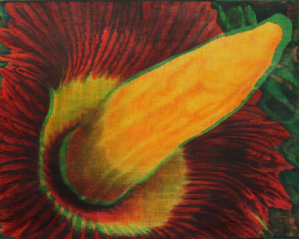 Amorphophallus repro (1024x819).jpg