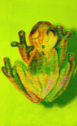 Glass Frog - front