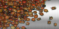 Migration no. 5 (Ladybugs)