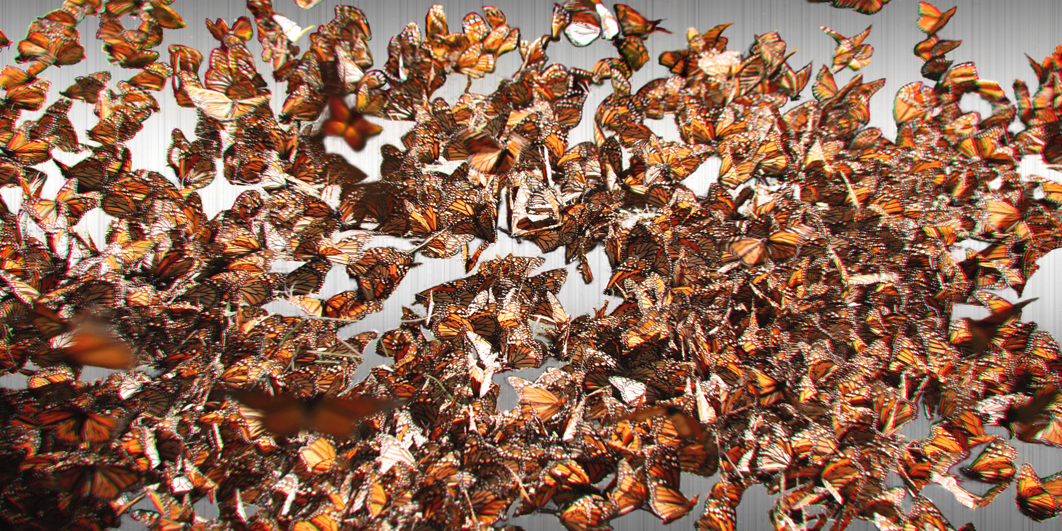 Migration n. 4 (Monarch Butterflies)