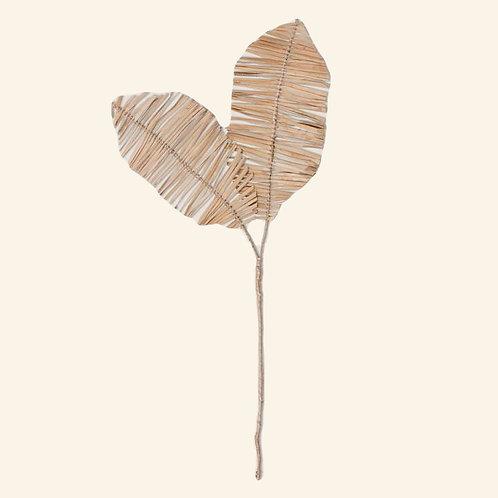 Delicado branche 2 feuilles