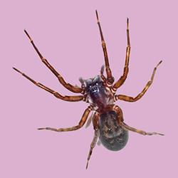 spider-b