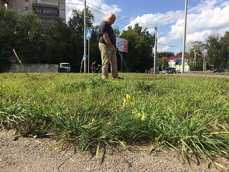 Николай газон.JPG