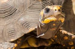 photographe-illustration-tortue-portovecchio-2017-elsarouanet