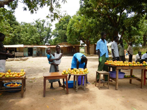 Time to Mango? Opportunities for Mango Related Investment in South Sudan