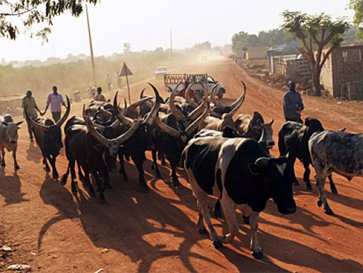 Equatorians call on President Kiir to halt movement of cattle