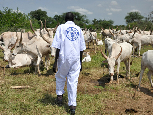 21 cattle camps to receive educational equipment